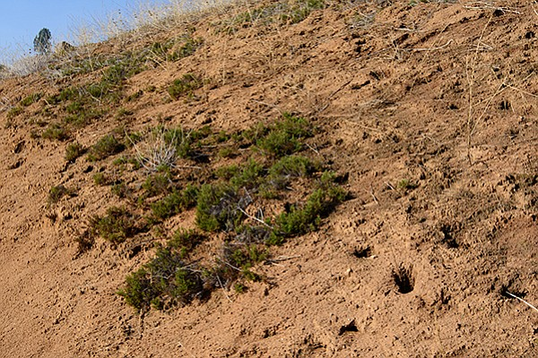Cryptogamic soil viewed from the trail