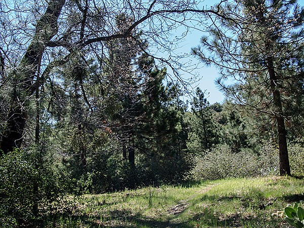 Grassy saddle with nearby Penny Pines