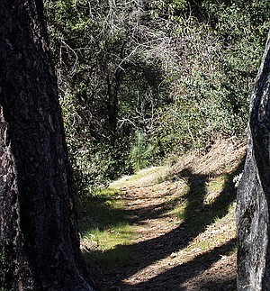 The shaded trail