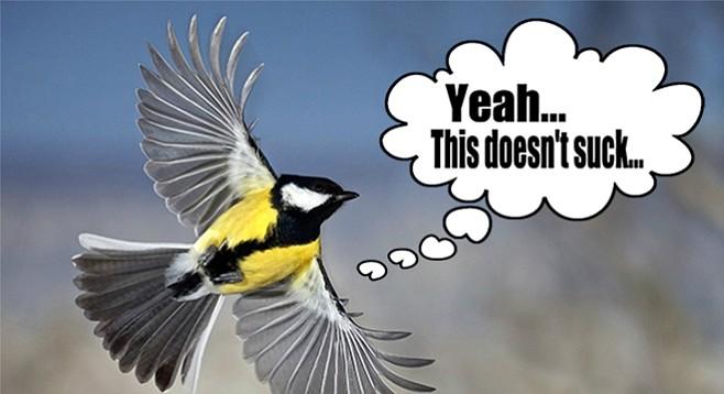Stoked bird.