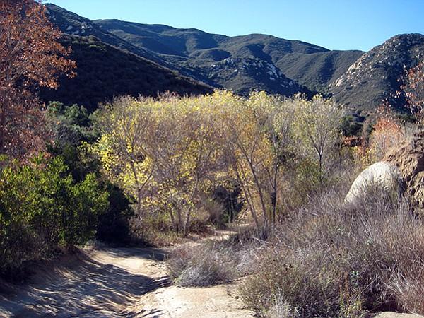 Riparian area, Sloan Canyon