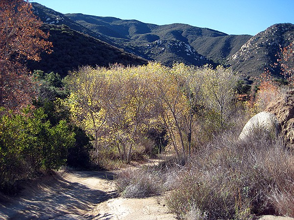 Riparian area, Sloan Canyon
