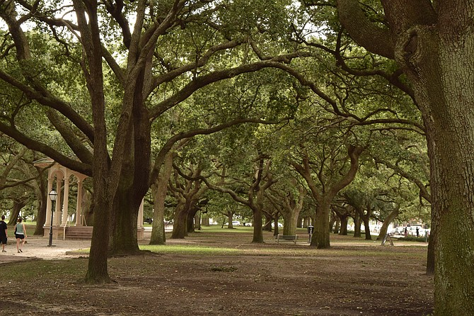Park on Battery Street In Charleston S.C.