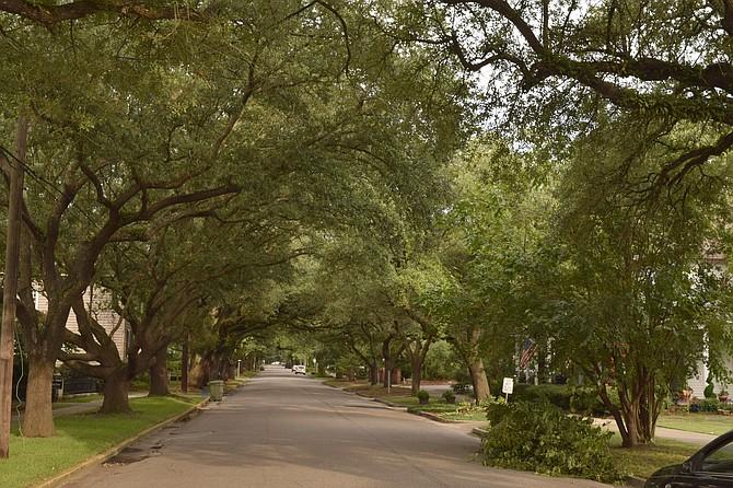 Oak Tree canopy street in Georgetown S.C.