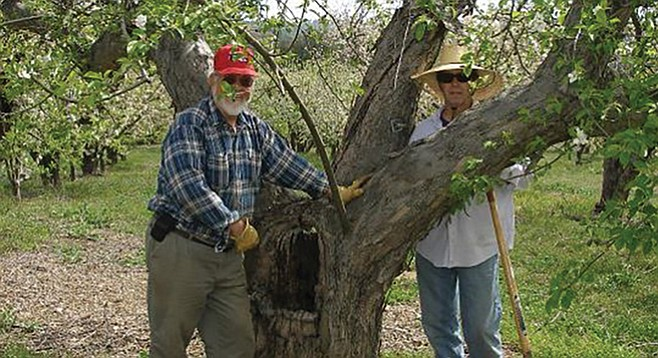 Les Turner (left) of Peacefield Orchard