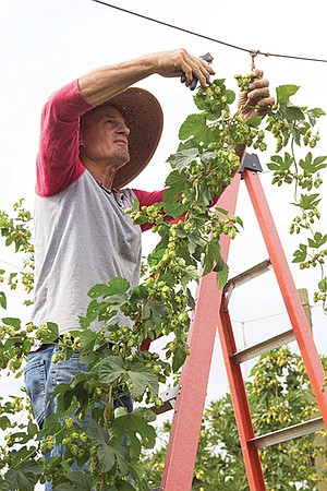 Gary Johndro along with his wife, Corie, own San Diego Golden Hop Farm in Fallbrook