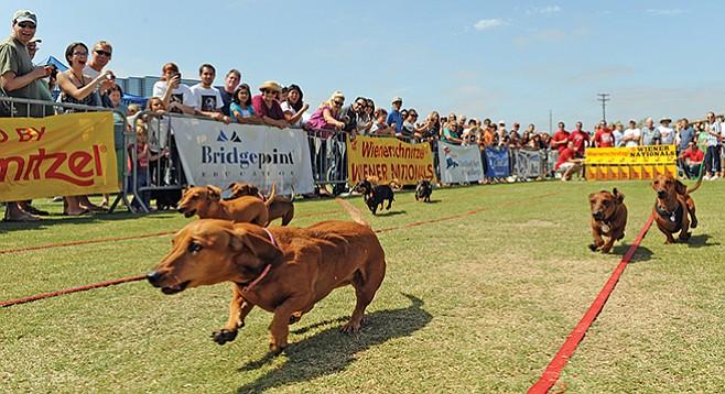 Saturday, October 3: Wienerschnitzel Wiener Nationals