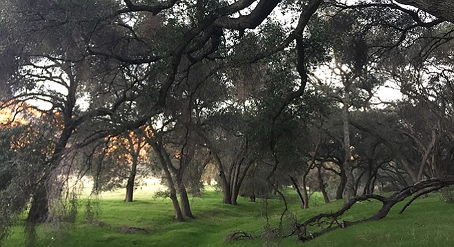 Jamul Creek is shaded by large oaks within the canyon.