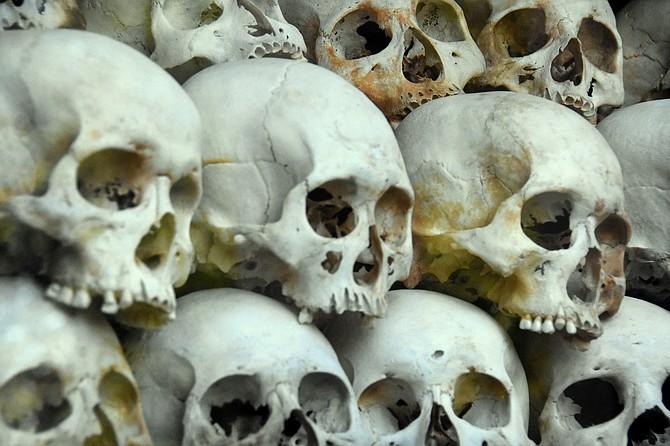 Close-up of glass-encased skulls