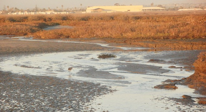 High tides have been one of the factors leading to the recent mosquito population boom