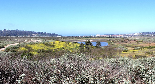 The Del Mar racetrack is visible through a field of coastal sage and across a seasonal pond.