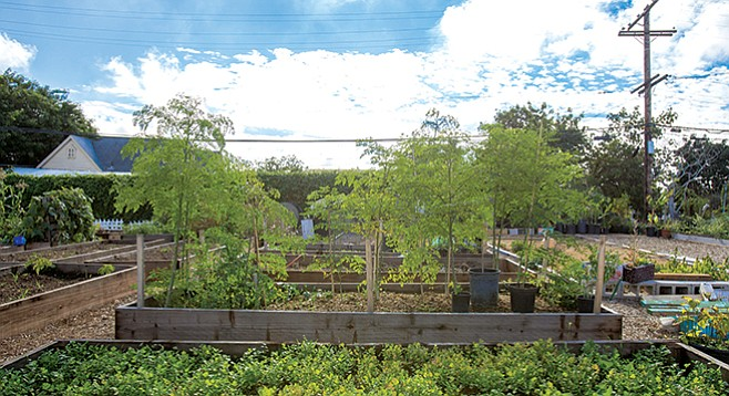 Mt. Hope Community Garden - Image by Andy Boyd