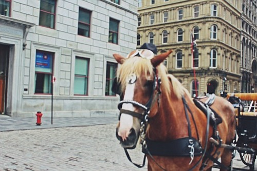 Horse carriage in Old Montreal
