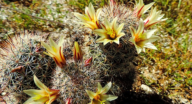 Look for fishhook cactus along the trail.