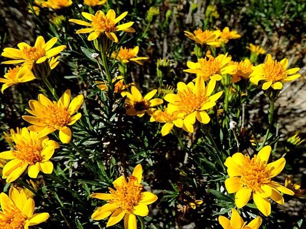 Flores amarillas - DIY flores amarillas de la boda - BloomsByTheBox.com