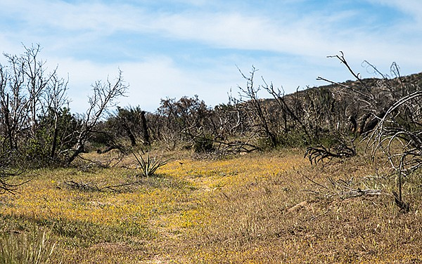 Spring wildflowers like goldfields and cream cups thrive along Wilson Trail