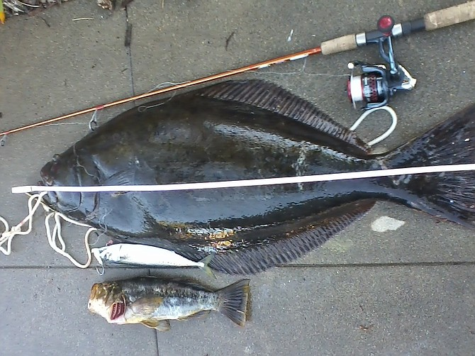 Ten-pound test and good luck landed this 40-inch halibut...which cost the fisherman his cell phone