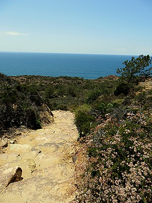 These stone stairs were one of the originals trails in Torrey Pines Reserve