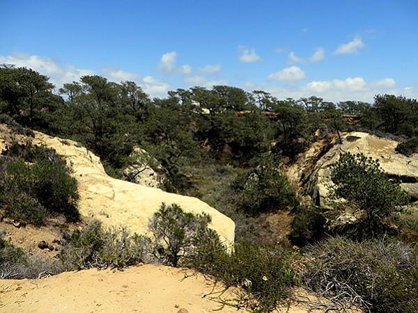 View towards Torrey Pines Lodge