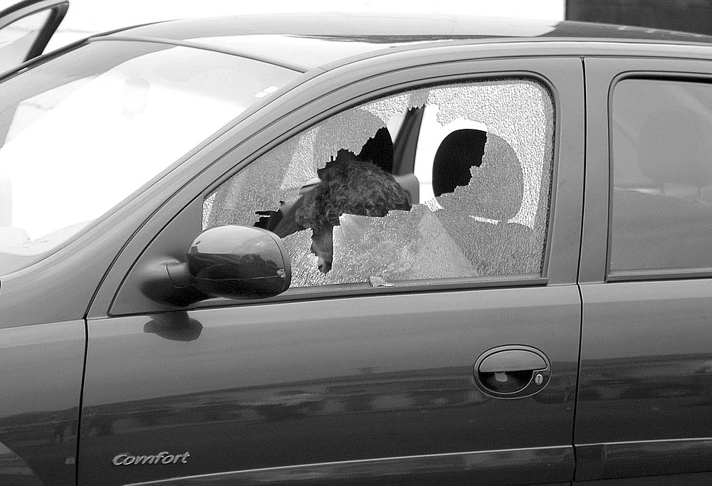 Francisco Ortiz Franco dead inside his car (Alejandro Cossio/Zeta)
