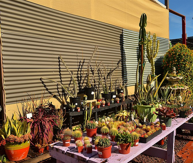 Cacti And Succulents At Mission Hills Nursery January 2016 Started By Kate Sessions In 1910