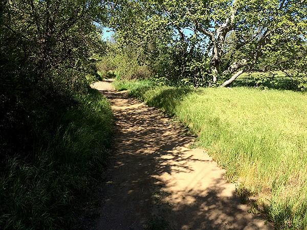 The trail goes through riparian woodlands near the creek