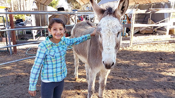 Jack the donkey with Ashley the visitor
