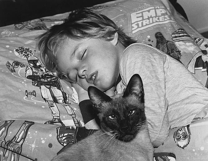 The Siamese guard cat is always awake.