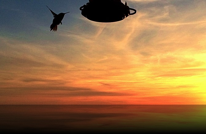 Sunset Photo shot from Del  Cerro, Humming bird(frequent resident)