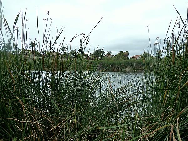 Guajome's upper pond