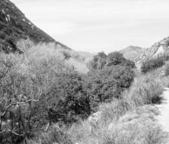 """Hauser Canyon. """"I wondered if my legs were burning off. It was the most painful thing I ever suffered."""" - Image by Mike Clark"""