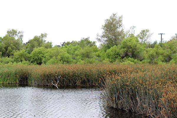 Tijuana River pond