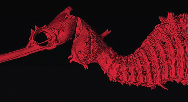 A 3-D scan of the newly discovered ruby sea dragon