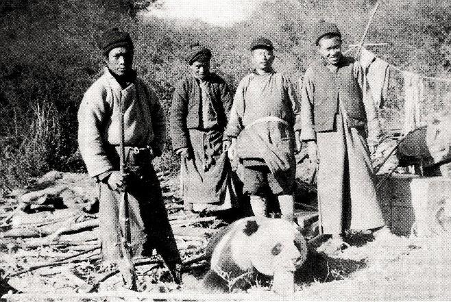 Second panda shot, November, 1936