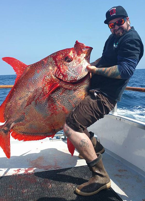 The first opah of 2016 caught aboard the Vendetta out of H&M; Landing on a 3/4 day charter.  It weighed in at 152 pounds.