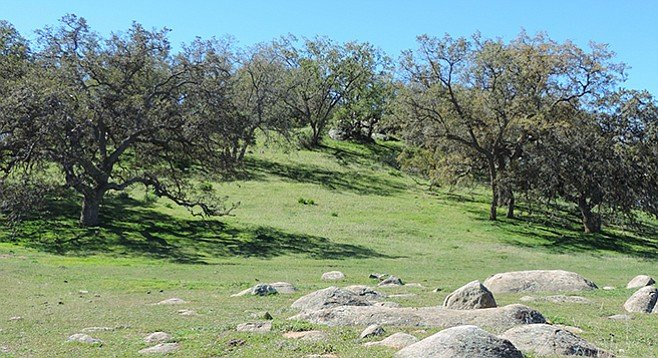 An oak woodland is one of the many habitats found in the county.