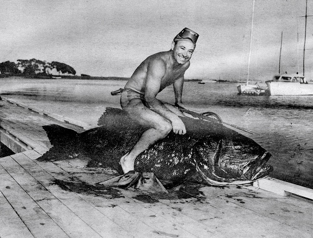 Jack Prodanovich and Black Sea Bass, c. 1954. The disappearance of larger fishes first became evident during the war.