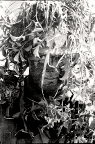 """""""Break up the outlines,"""" they are told by the DI. Several emerge from the brush looking like walking trees."""