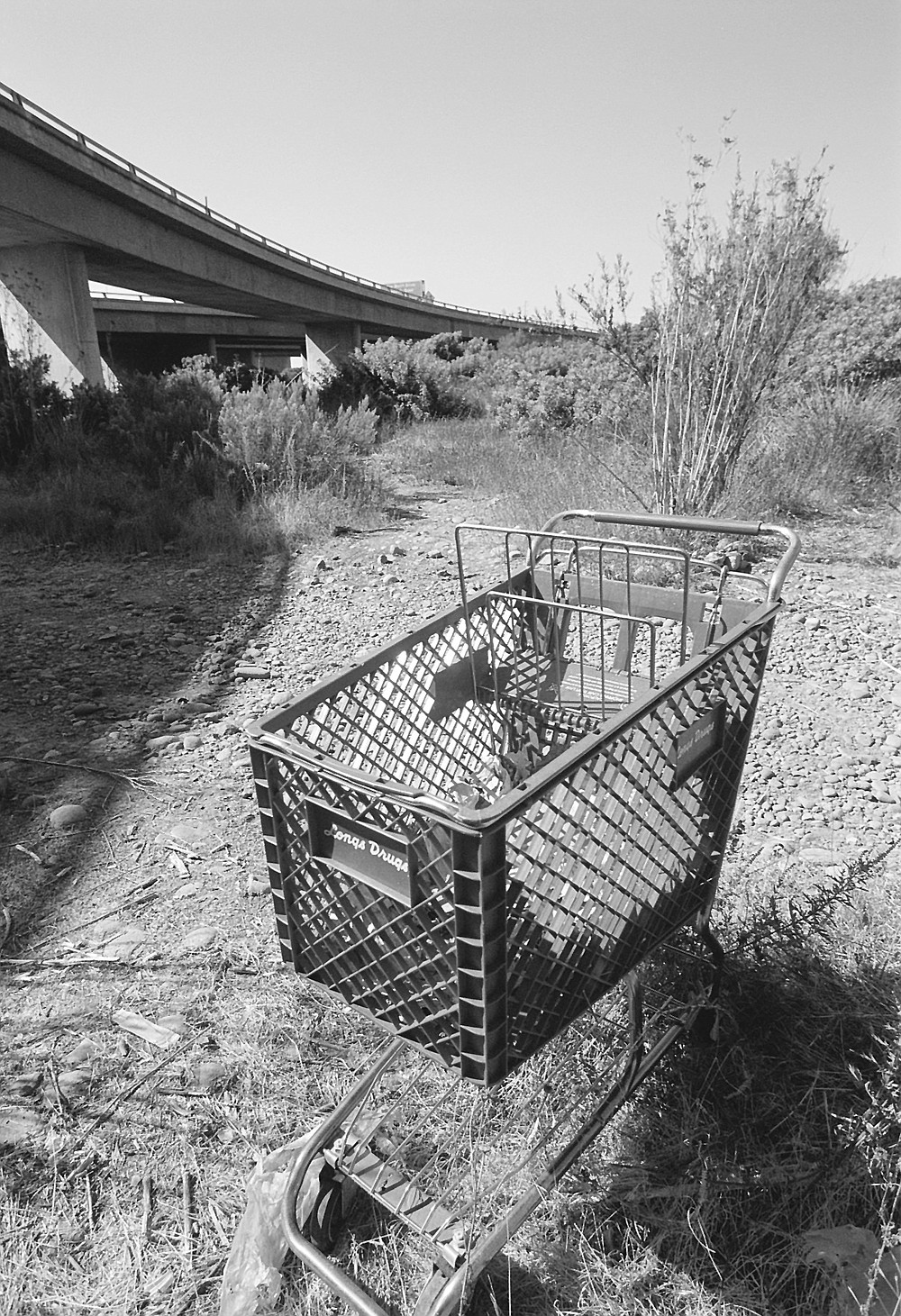 The river has largemouth bass and green sunfish, as well as shopping carts and Styrofoam containers.