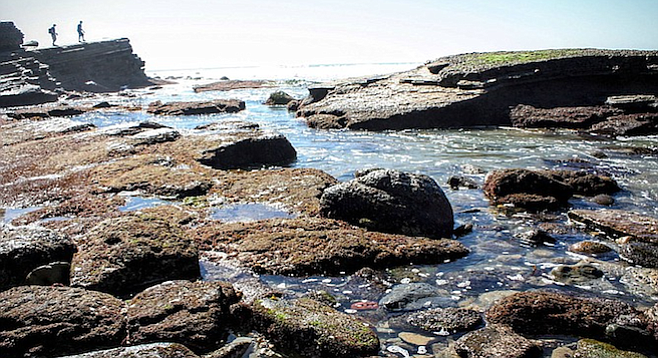 "The National Park Service calls the Cabrillo tide pools ""one of the best-protected and easily accessible rocky intertidal areas in southern California."""