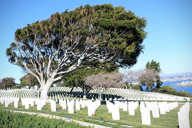 Fort Rosecrans Cemetery sprawls out with a view of the San Diego Bay below.