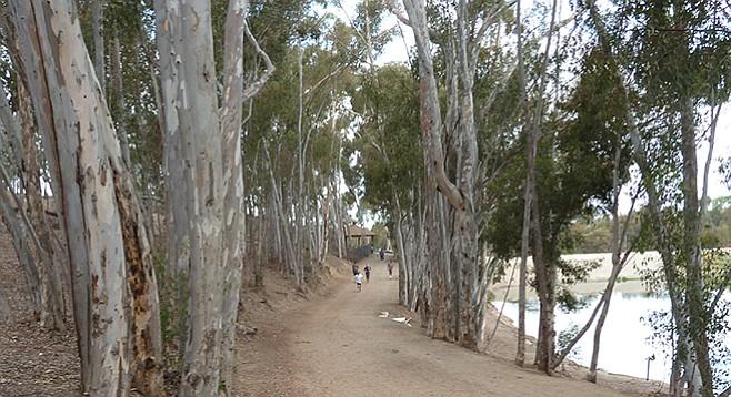A walking/jogging trail surrounds Chollas Lake.