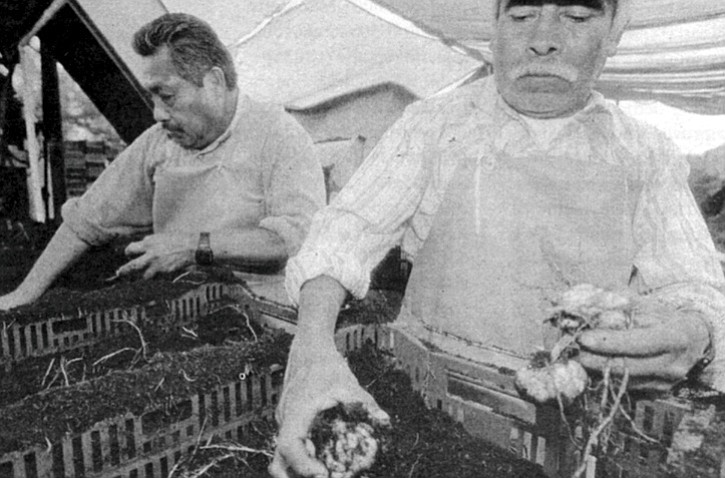 "Planting bulbs. ""We got on the coattails of the Dutch, and as they were promoting bulbs, we started producing them."""