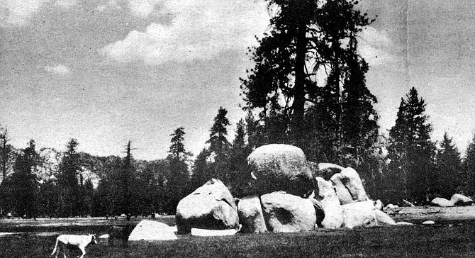 La Grulla Meadow - Image by Dick Schwenkmeyer