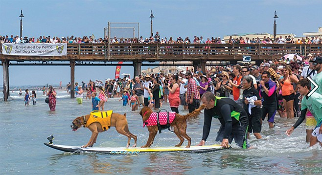 Saturday, July 30: Surf Dogs