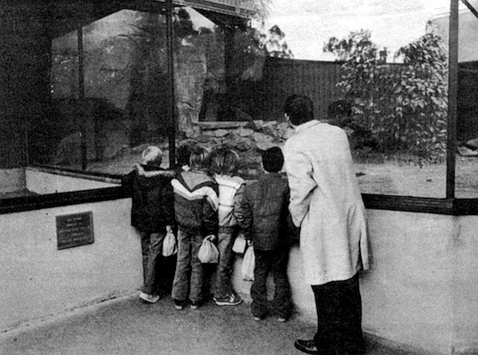 Reptile exhibit. As long as two million years ago the hunt already offered more to hunters than food and skins.