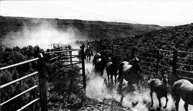 """Wild horse roundup. """"Some people call them horses up there 'mustangs,' but that ain't right."""""""