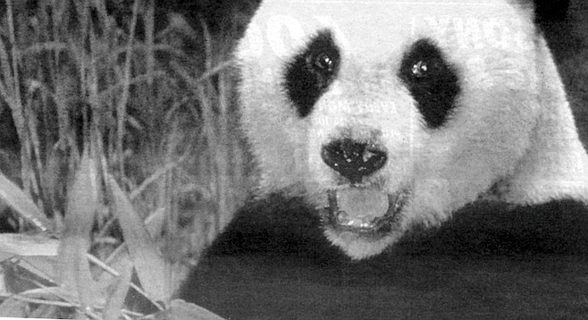 Stansell conceded that Shi Shi, the male panda sought by the zoo, had been legitimately rescued from the wild.