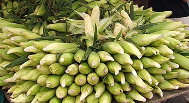 Sweet white corn is a great vegetable to eat in season — especially non-GMO varieties grown at local farms.