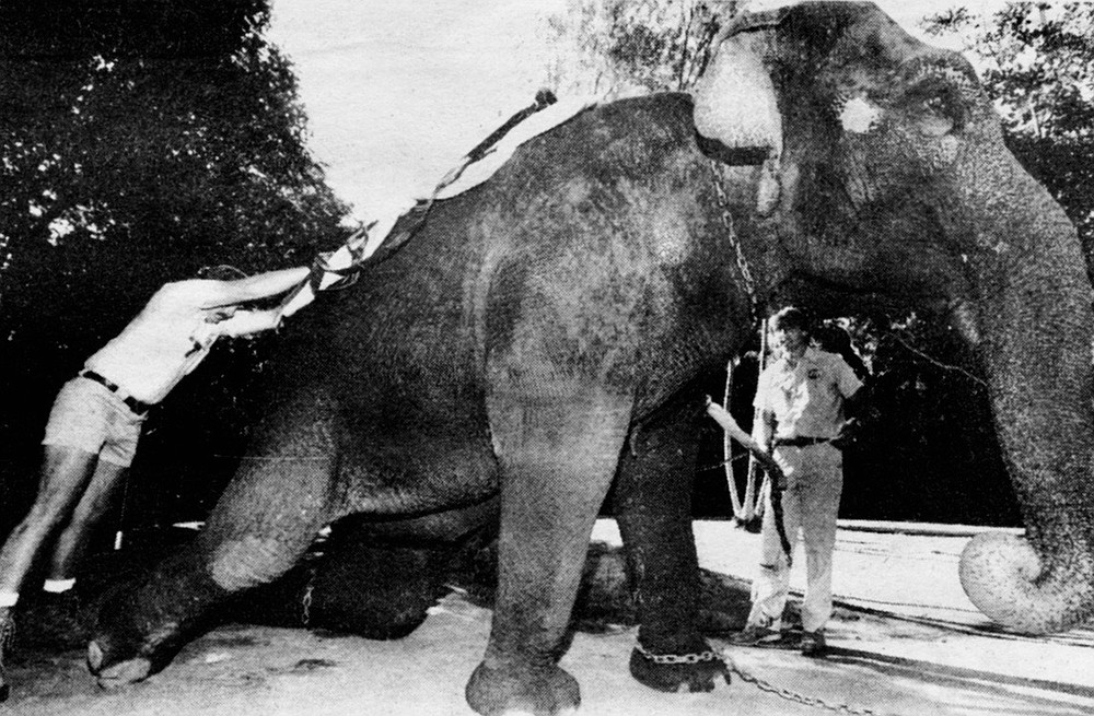 """Cindy saddling up for children's rides. """"Everyone wanted to know why we were taking this 'vicious' elephant."""""""